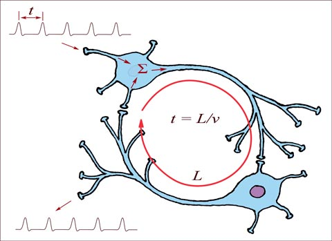 two-neurons-spikes